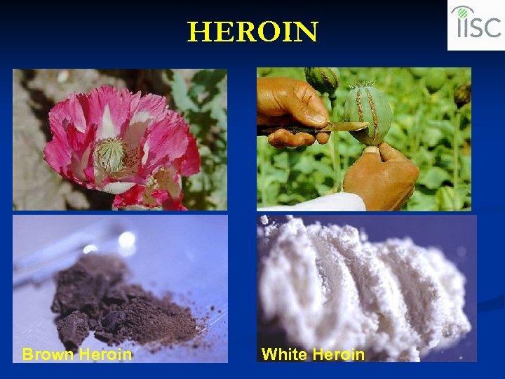 HEROIN Brown Heroin White Heroin
