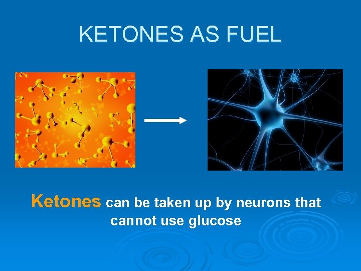 KETONES AS FUEL Ketones can be taken up by neurons that cannot use glucose
