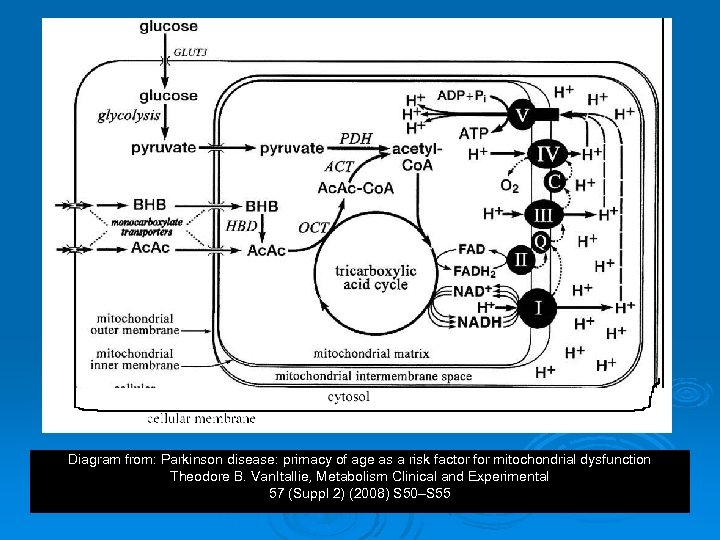 Diagram from: Parkinson disease: primacy of age as a risk factor for mitochondrial dysfunction