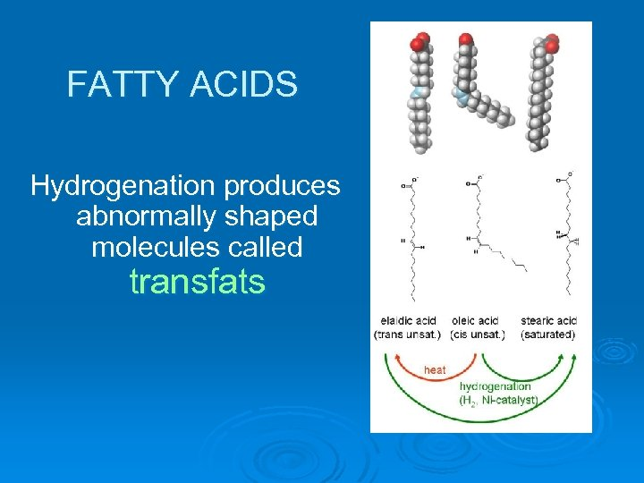 FATTY ACIDS Hydrogenation produces abnormally shaped molecules called transfats