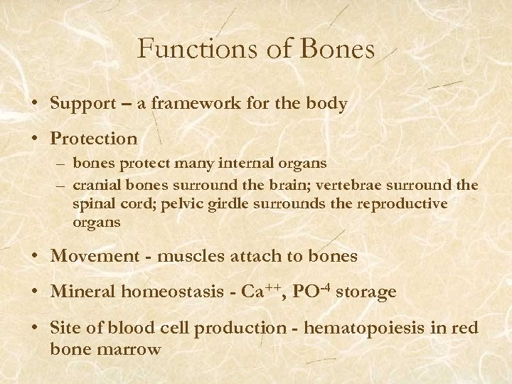 Functions of Bones • Support – a framework for the body • Protection –