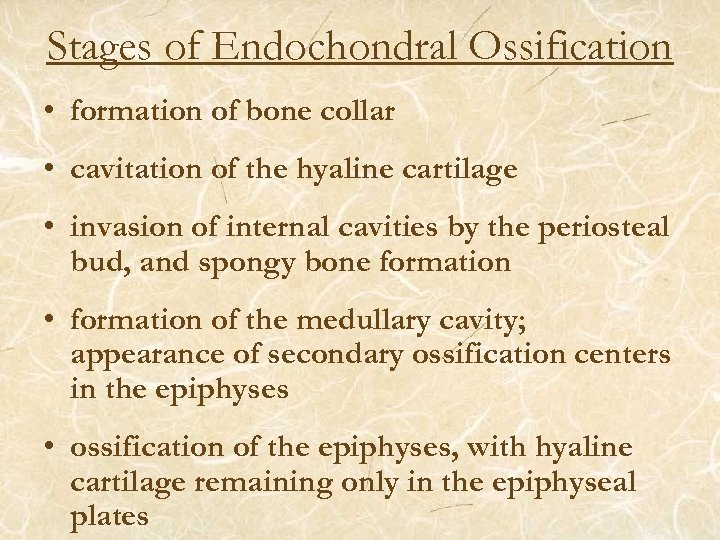 Stages of Endochondral Ossification • formation of bone collar • cavitation of the hyaline