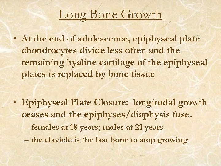 Long Bone Growth • At the end of adolescence, epiphyseal plate chondrocytes divide less