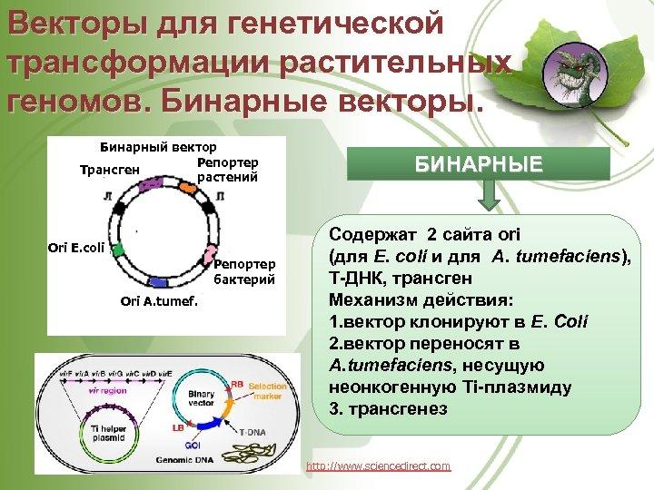 Векторы для генетической трансформации растительных геномов. Бинарные векторы. Бинарный вектор Репортер Трансген растений Ori