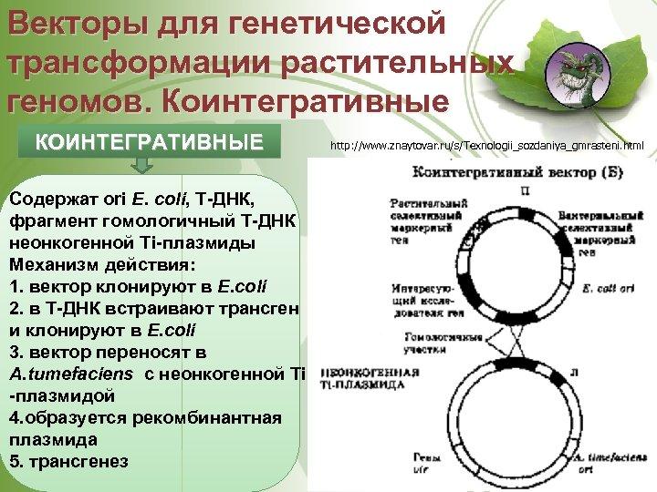 Векторы для генетической трансформации растительных геномов. Коинтегративные КОИНТЕГРАТИВНЫЕ Содержат ori Е. coli, Т ДНК,