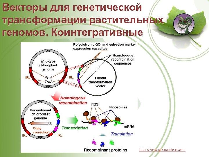 Векторы для генетической трансформации растительных геномов. Коинтегративные http: //www. sciencedirect. com