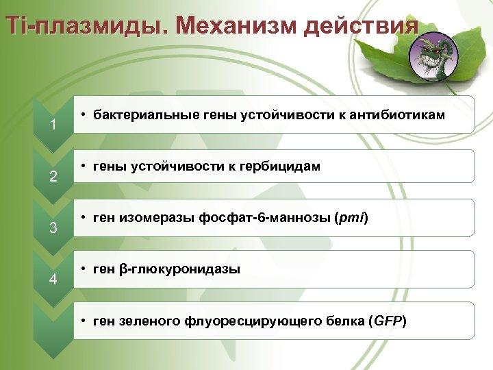 Ti плазмиды. Механизм действия 1 2 3 4 • бактериальные гены устойчивости к антибиотикам