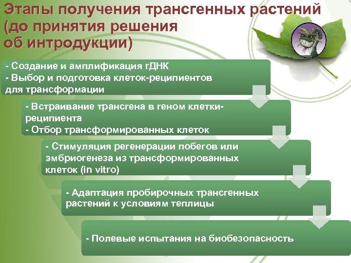 Этапы получения трансгенных растений (до принятия решения об интродукции) Создание и амплификация r. ДНК