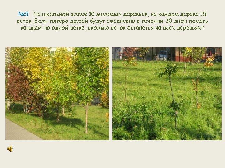 № 5 На школьной аллее 10 молодых деревьев, на каждом дереве 15 веток. Если