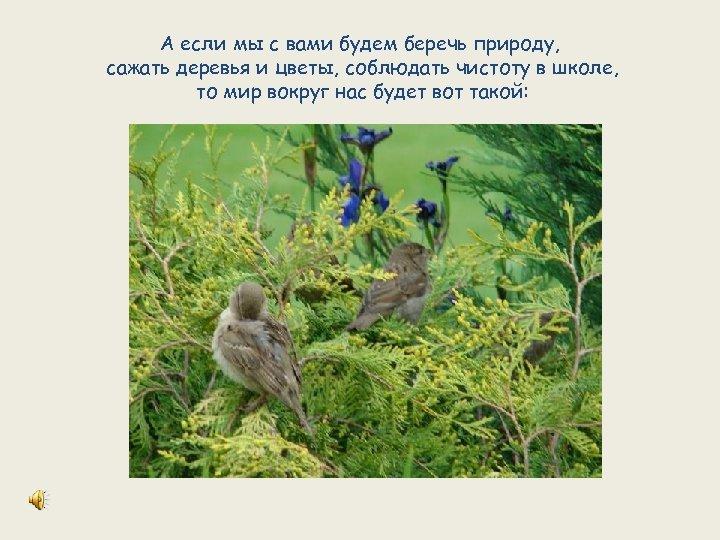 А если мы с вами будем беречь природу, сажать деревья и цветы, соблюдать чистоту