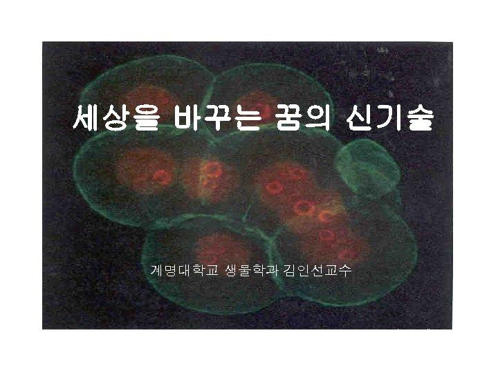 세상을 바꾸는 꿈의 신기술 계명대학교 생물학과 김인선교수 mouse embryo cells