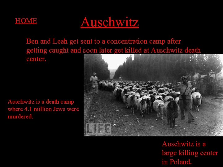 HOME Auschwitz Ben and Leah get sent to a concentration camp after getting caught
