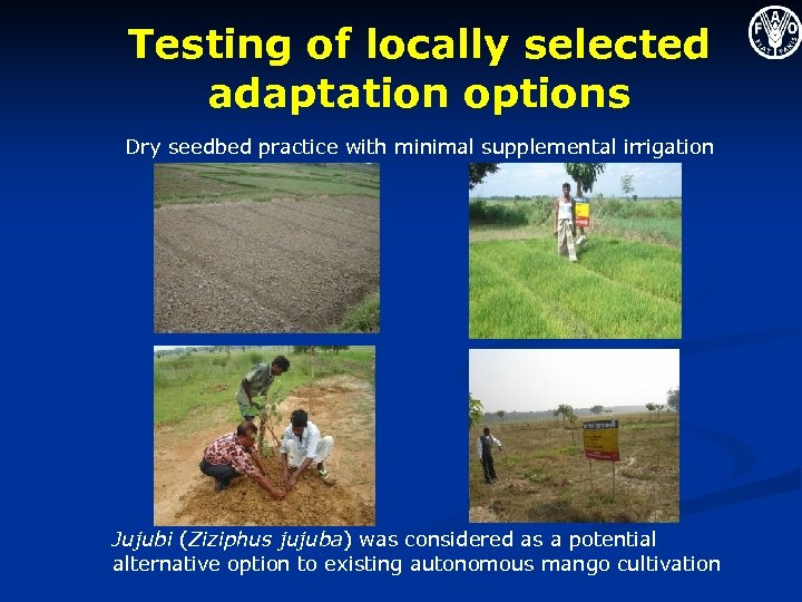 Testing of locally selected adaptation options Dry seedbed practice with minimal supplemental irrigation Jujubi