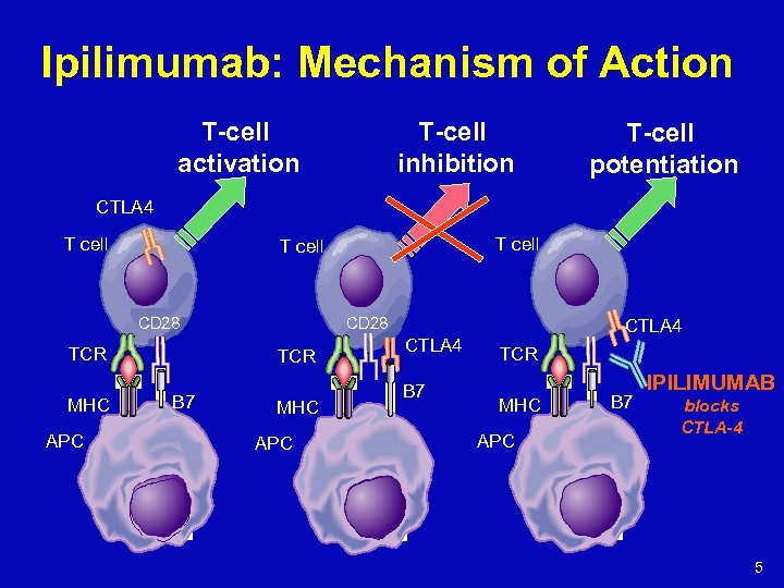 Ipilimumab: Mechanism of Action T-cell activation T-cell inhibition T-cell potentiation CTLA 4 T cell