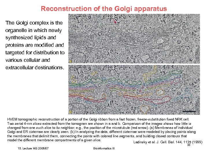 Reconstruction of the Golgi apparatus The Golgi complex is the organelle in which newly
