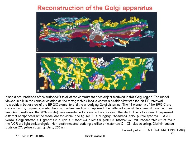 Reconstruction of the Golgi apparatus c and d are renditions of the surfaces fit