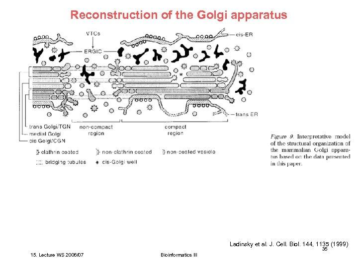 Reconstruction of the Golgi apparatus Ladinsky et al. J. Cell. Biol. 144, 1135 (1999)