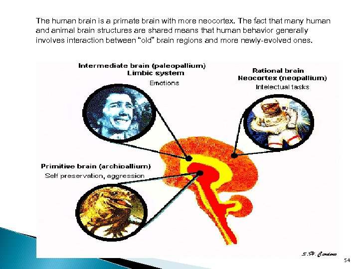 The human brain is a primate brain with more neocortex. The fact that many