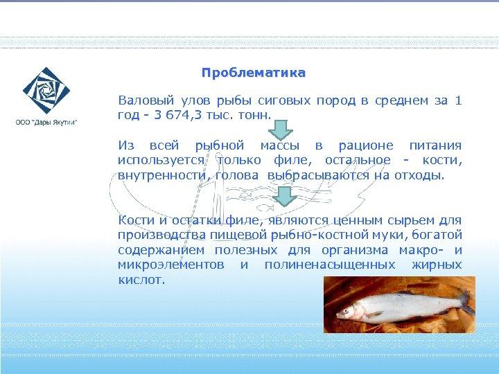 Проблематика Валовый улов рыбы сиговых пород в среднем за 1 год - 3 674,