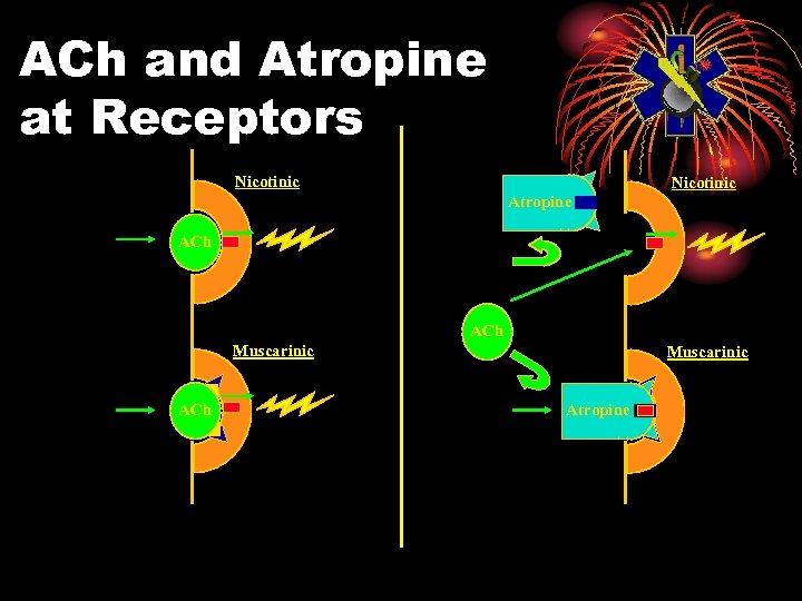 ACh and Atropine at Receptors Nicotinic Atropine ACh Muscarinic Atropine