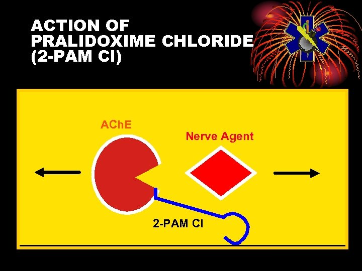 ACTION OF PRALIDOXIME CHLORIDE (2 -PAM Cl) ACh. E Nerve Agent 2 -PAM Cl