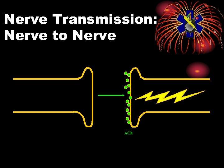 Nerve Transmission: Nerve to Nerve ACh