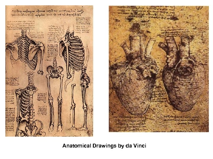 Anatomical Drawings by da Vinci