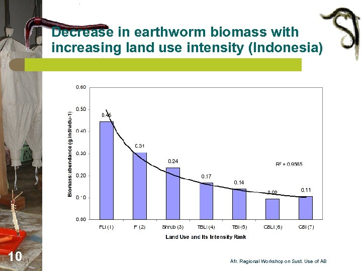 Decrease in earthworm biomass with increasing land use intensity (Indonesia) 10 Afr. Regional Workshop