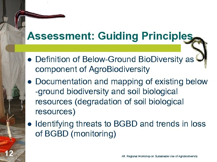 Assessment: Guiding Principles l l l 12 Definition of Below-Ground Bio. Diversity as component