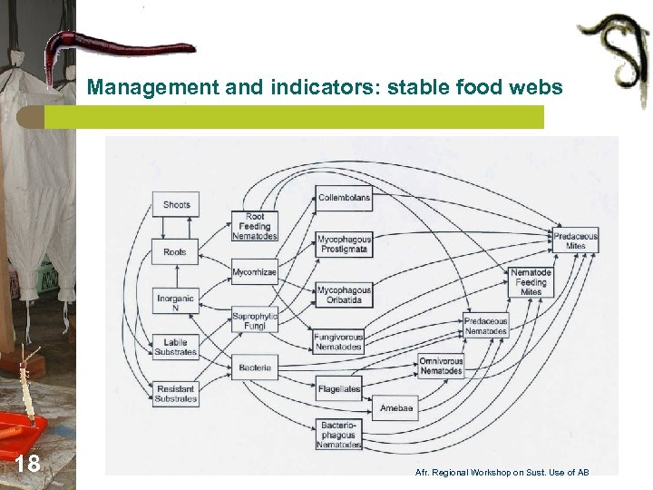 Management and indicators: stable food webs 18 Afr. Regional Workshop on Sust. Use of