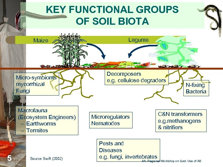 KEY FUNCTIONAL GROUPS OF SOIL BIOTA Maize Micro-symbionts mycorrhizal Fungi Macrofauna (Ecosystem Engineers) –