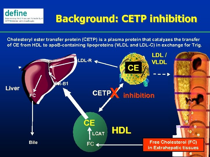 Background: CETP inhibition Cholesteryl ester transfer protein (CETP) is a plasma protein that catalyzes