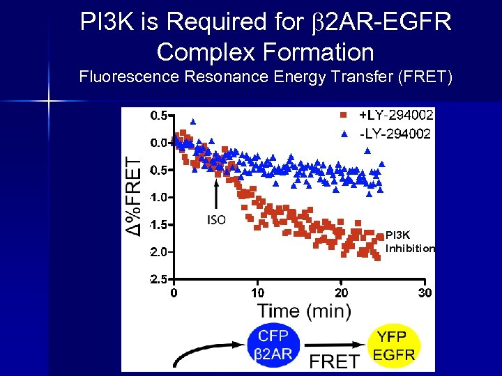 PI 3 K is Required for 2 AR-EGFR Complex Formation Fluorescence Resonance Energy Transfer