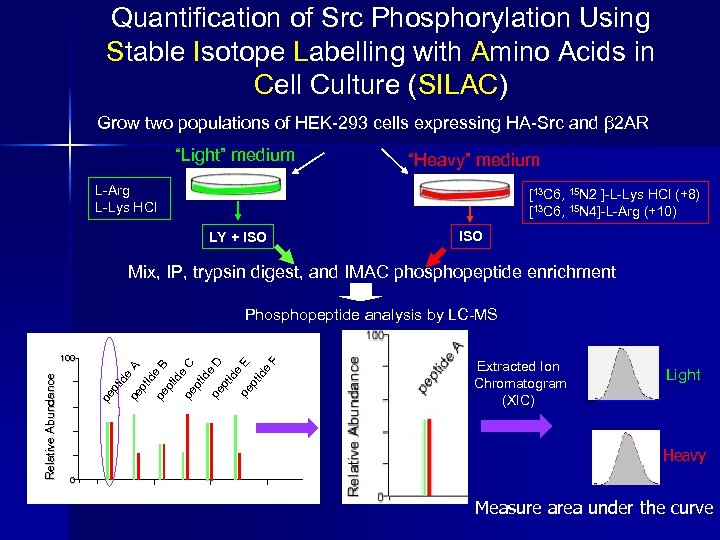 Quantification of Src Phosphorylation Using Stable Isotope Labelling with Amino Acids in Cell Culture