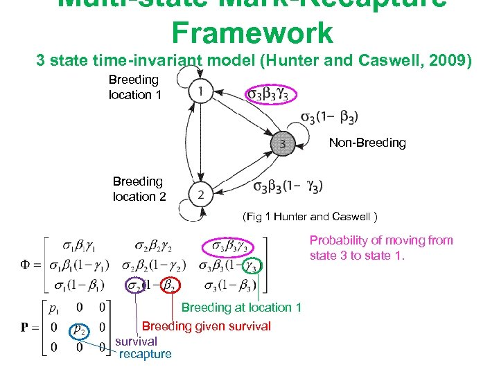 Multi-state Mark-Recapture Framework 3 state time-invariant model (Hunter and Caswell, 2009) Breeding location 1