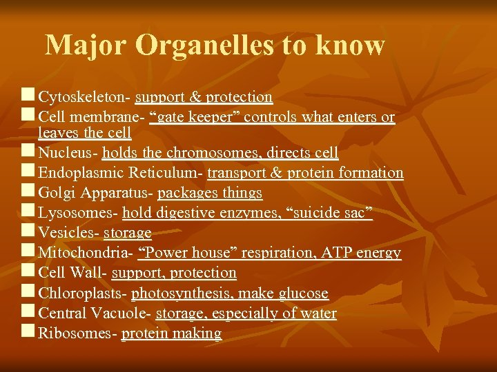 "Major Organelles to know n Cytoskeleton- support & protection n Cell membrane- ""gate keeper"""
