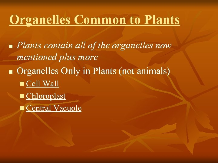 Organelles Common to Plants n n Plants contain all of the organelles now mentioned