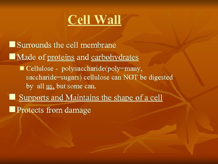 Cell Wall n Surrounds the cell membrane n Made of proteins and carbohydrates n