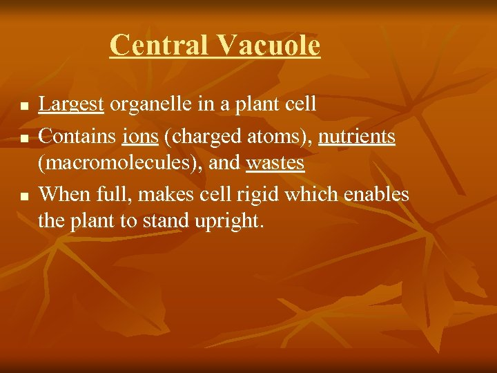 Central Vacuole n n n Largest organelle in a plant cell Contains ions (charged