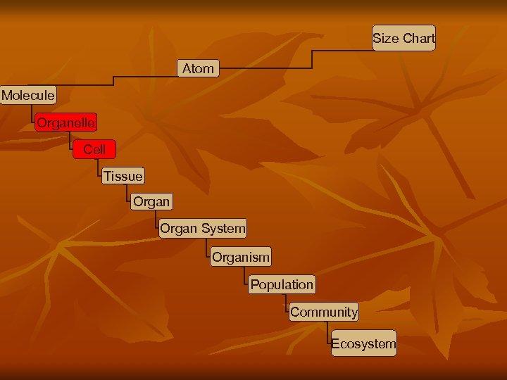 Size Chart Atom Molecule Organelle Cell Tissue Organ System Organism Population Community Ecosystem