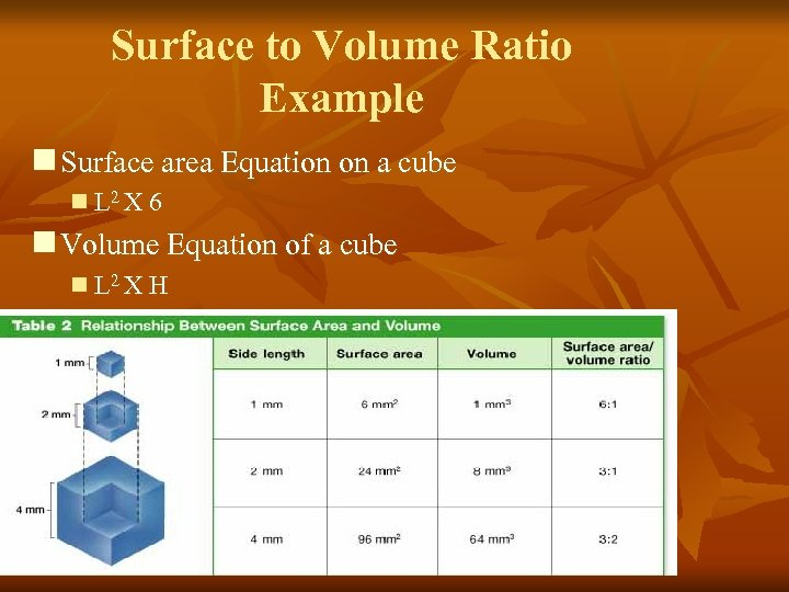 Surface to Volume Ratio Example n Surface area Equation on a cube n L