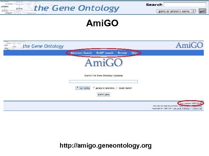 Ami. GO http: //amigo. geneontology. org