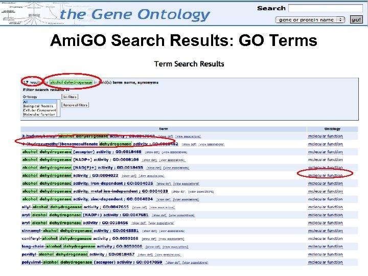 Ami. GO Search Results: GO Terms