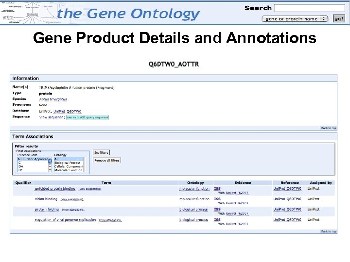 Gene Product Details and Annotations