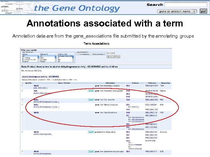 Annotations associated with a term Annotation data are from the gene_associations file submitted by