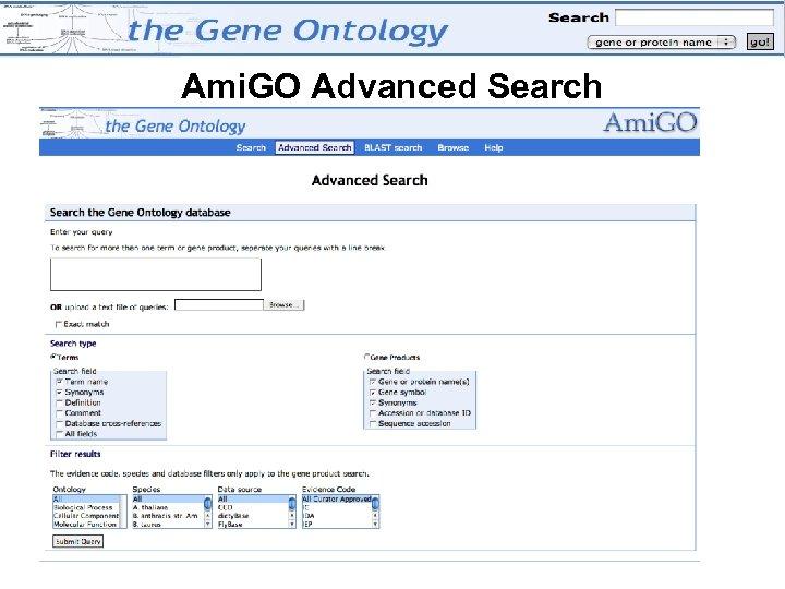 Ami. GO Advanced Search