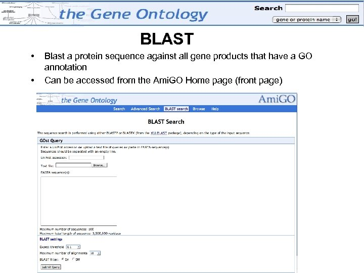 BLAST • • Blast a protein sequence against all gene products that have a