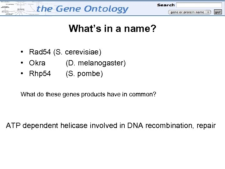 What's in a name? • Rad 54 (S. cerevisiae) • Okra (D. melanogaster) •