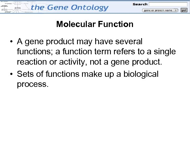 Molecular Function • A gene product may have several functions; a function term refers