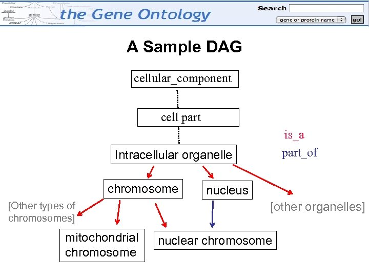 A Sample DAG cellular_component cell part is_a part_of Intracellular organelle chromosome [Other types of